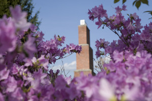belltower_flowers